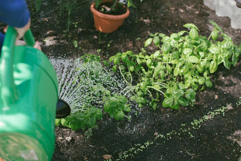 Bagnare Piante Con Bottiglie come annaffiare le piante in vacanza - palazzetti magazine