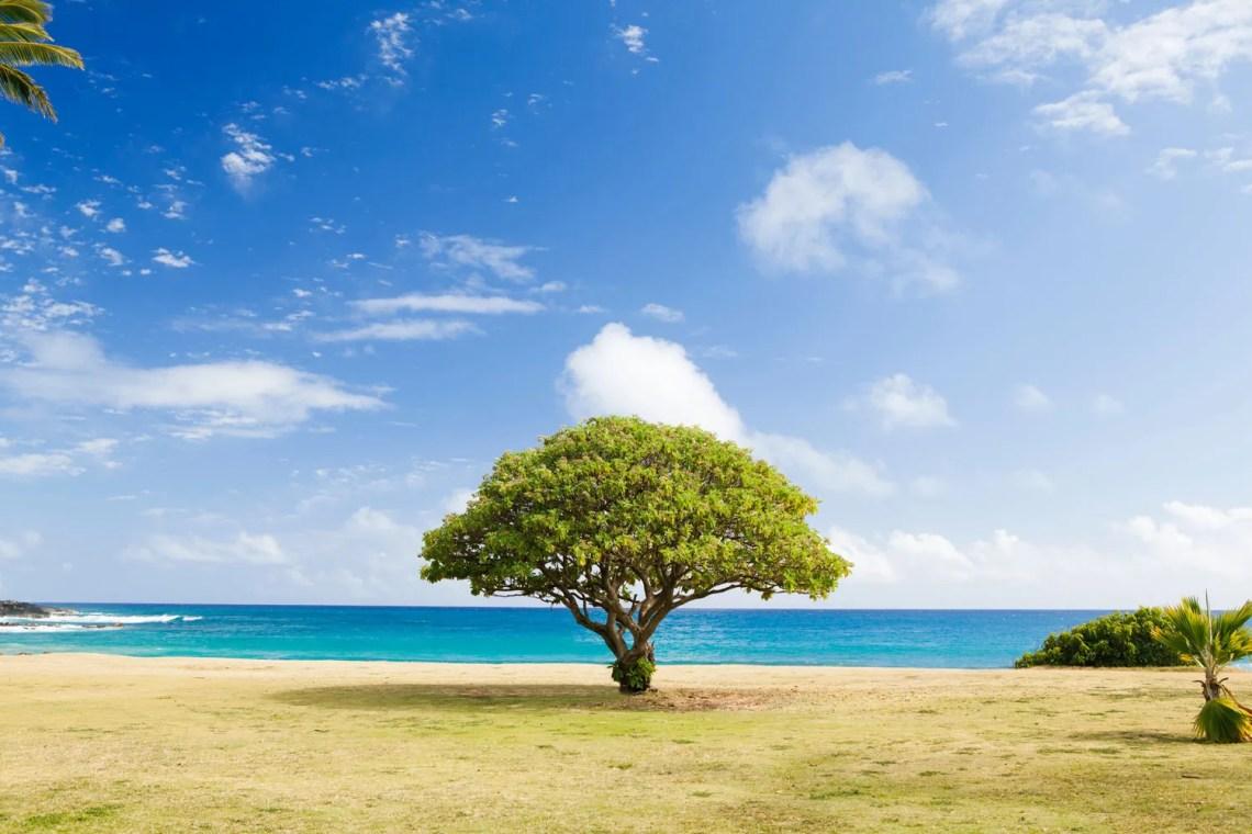estinzione-delle-piante_tropici