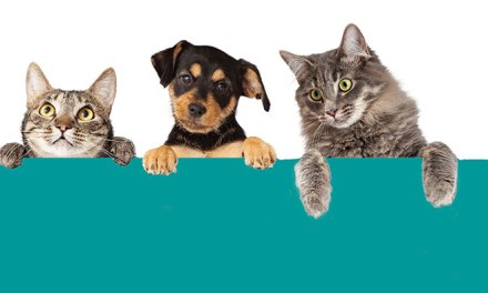 Tips to Make Your Animals More Comfortable at the Vet