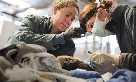 Here: Veterinary Innovation