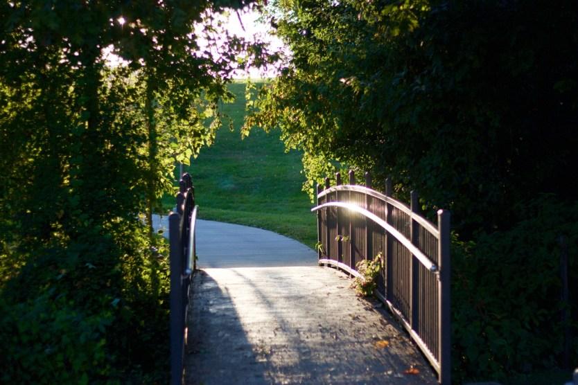bridge with trees framing the shot