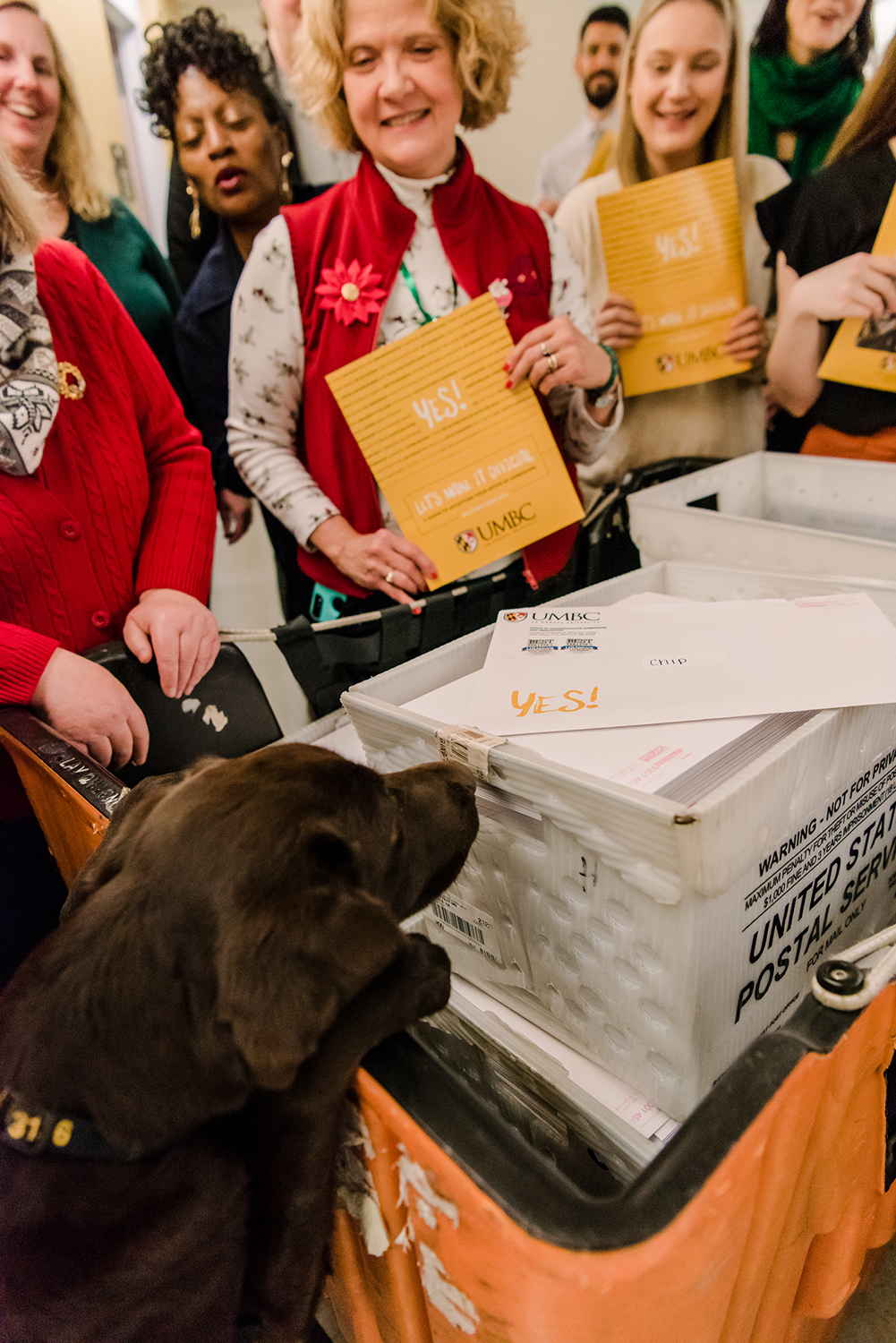 UMBC Police comfort dog stands on find legs to accept a UMBC acceptance letter out of a postal box