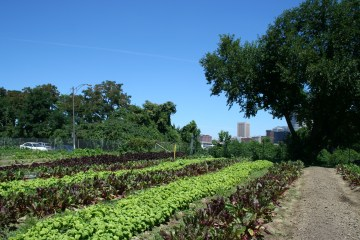 Urban farm with sprouted greens