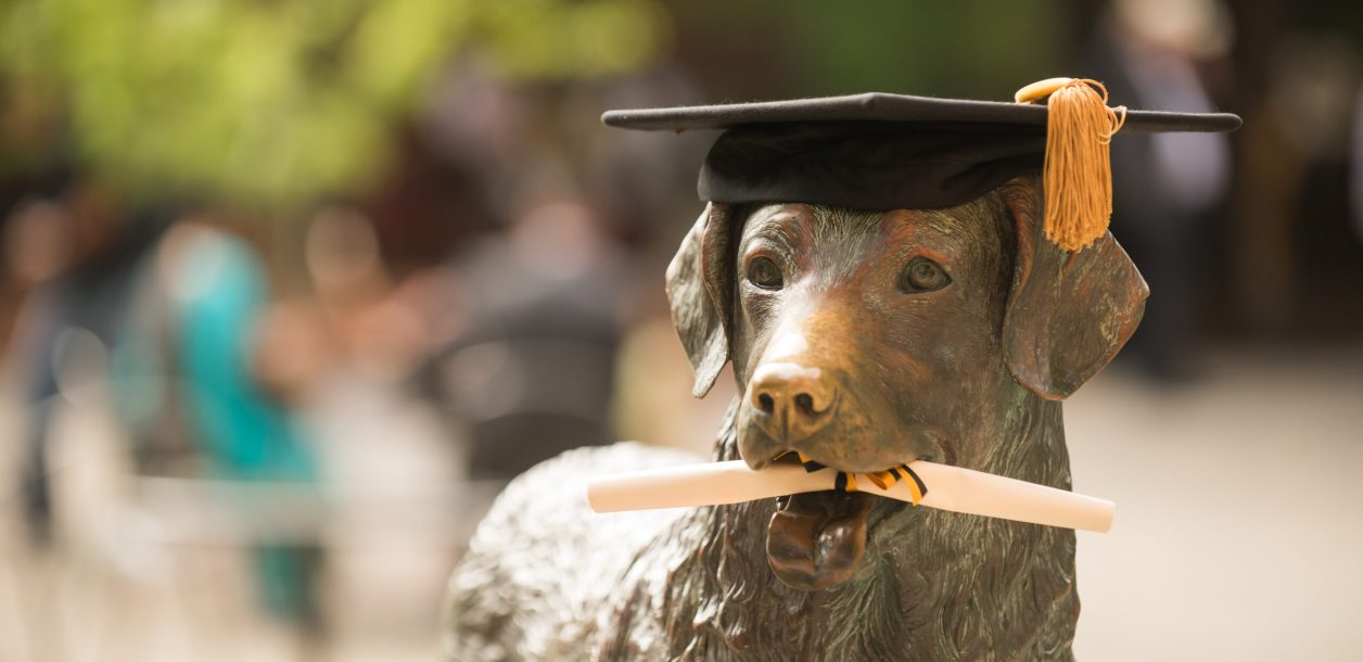 True grit statue with diploma in mouth and cap