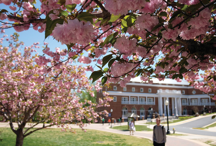 Cherry blossoms and spring midterms hit campus about the same time, giving students something peaceful to look at between study sessions at the Hurley Convergence Center. (Photo by Norm Shafer)