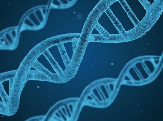 L'immagine mostra una rappresentazione di filamenti di DNA