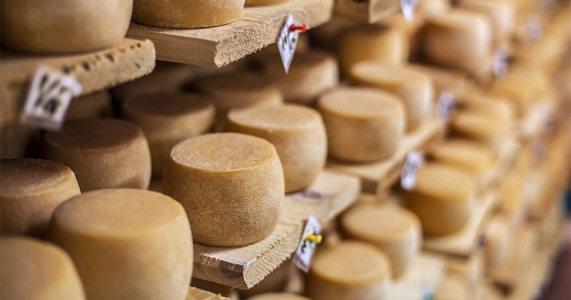 Transformation alimentaire - Les fromages