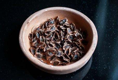 preincoltirea si sadirea semintelor
