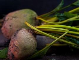 Sfecla rosie/ galbena – Cultivare