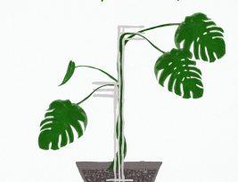 3 Idei de Suporturi pentru Plante