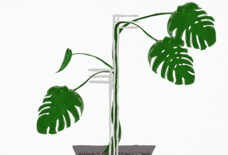 idei suport plante
