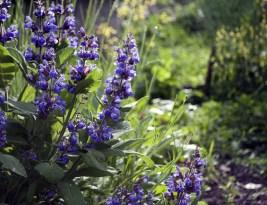 10 Idei de cultivare a legumelor în grădina din fața casei