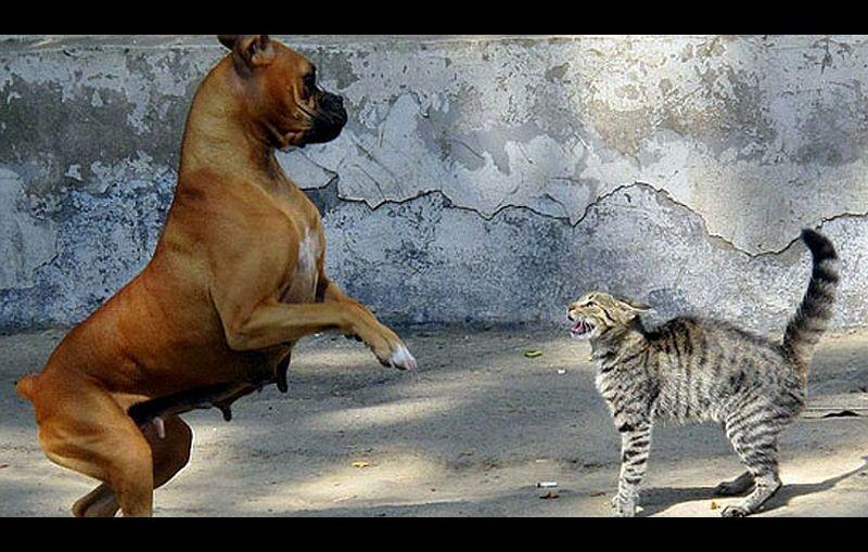Opowieści o ludziach: Jak pies z kotem…