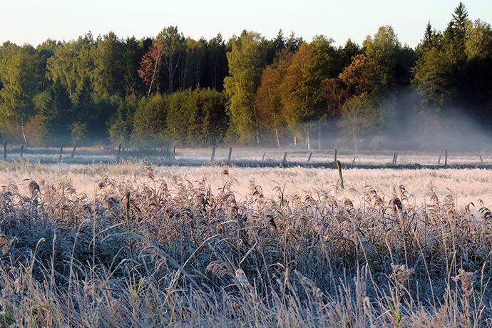 Najciekawsze lasy w Polsce - Puszcza Augustowska