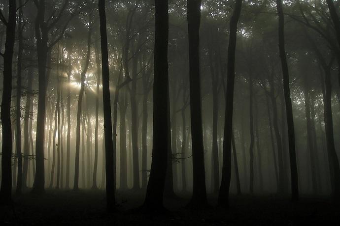 Najciekawsze lasy w Polsce - Las w Witkowicach