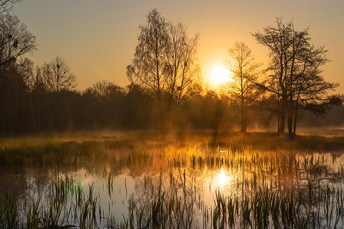 Najciekawsze lasy w Polsce - Puszcza Kampinoska