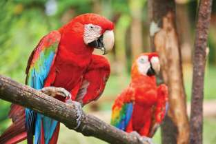 Nad brzegami jeziora Yojoa żyją papugi