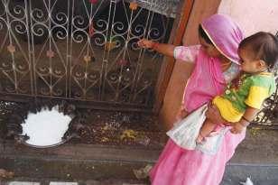 Pielgrzymi przynoszą świętym szczurom dary – orzeszki i słodycze