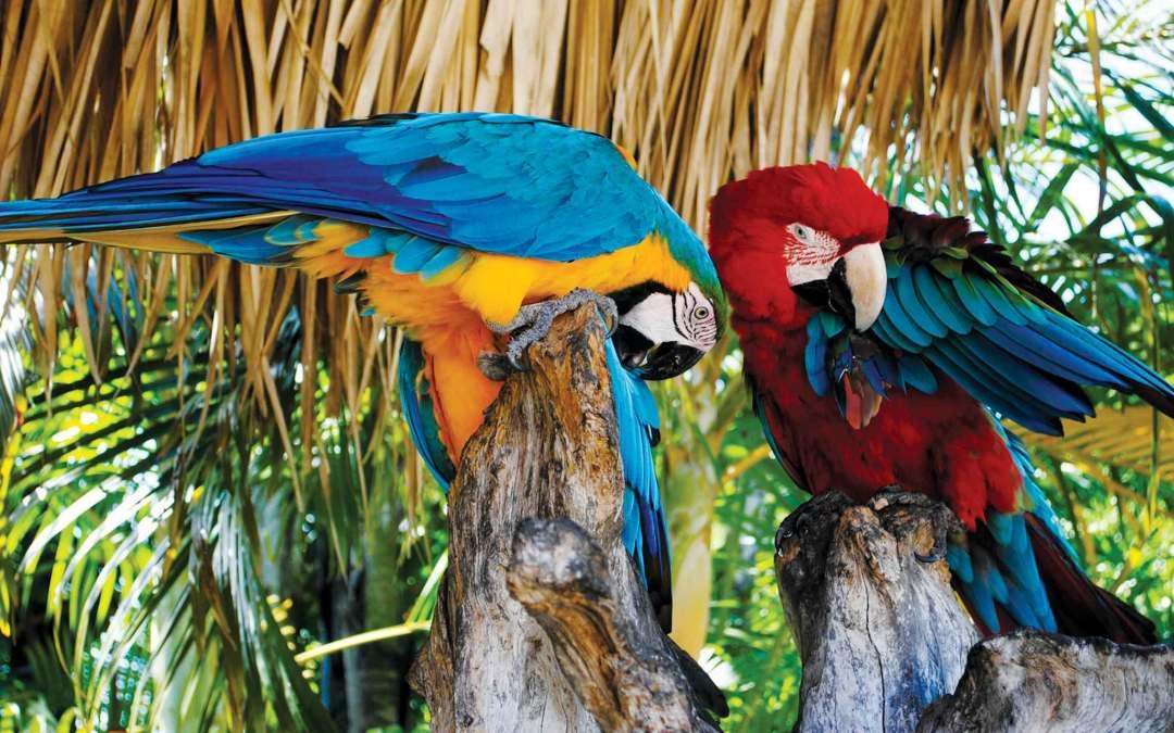 Dominikana – skarby karaibskiej republiki
