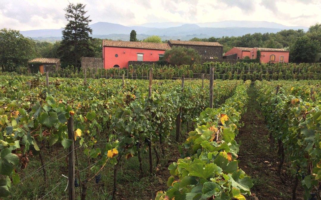 Terrazze dell'Etna – wino na wulkanie
