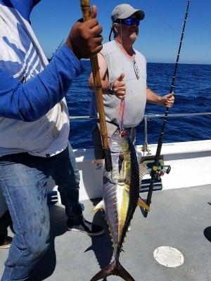 Jagged jet lure catching Tuna