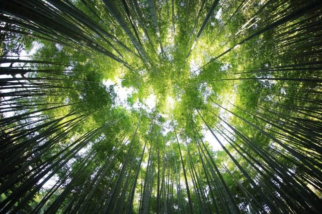 Verbindung zur Natur ist ein unterschätzter Faktor für Gesundheit, Zufriedenheit und unser Gewicht.