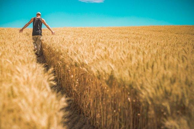 Viele Menschen können sich ihr Leben ohne ihr geliebtes Brot oder Brötchen gar nicht vorstellen.