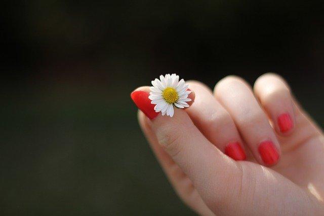 Gänseblümchen können glücklich machen.