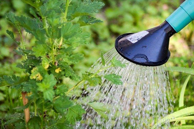 Pflanzen wie auch Menschen, brauchen kontinuierliche Pflege.