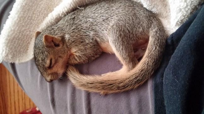 Schlafen-Eichhörnchenstrategie8-DrSchauenberg