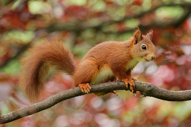 Inzwischen gibt es 10 tiny habits im Rahmen der Eichhörnchenstrategie. Heute geht es um BEWEGUNG.