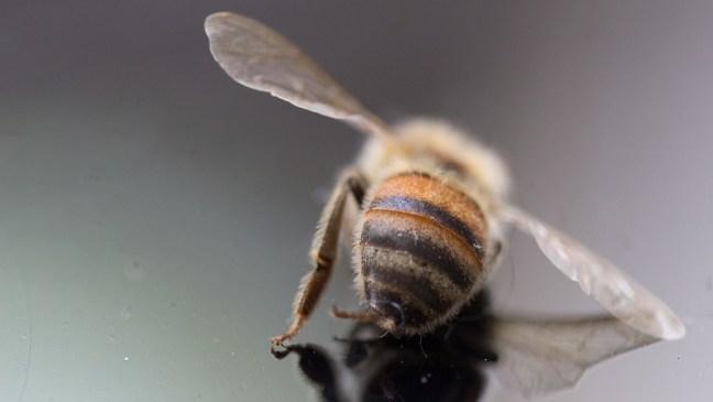 Bienen-DirtyDozen-Gifte-Pestizide-Umwelt-Toxine