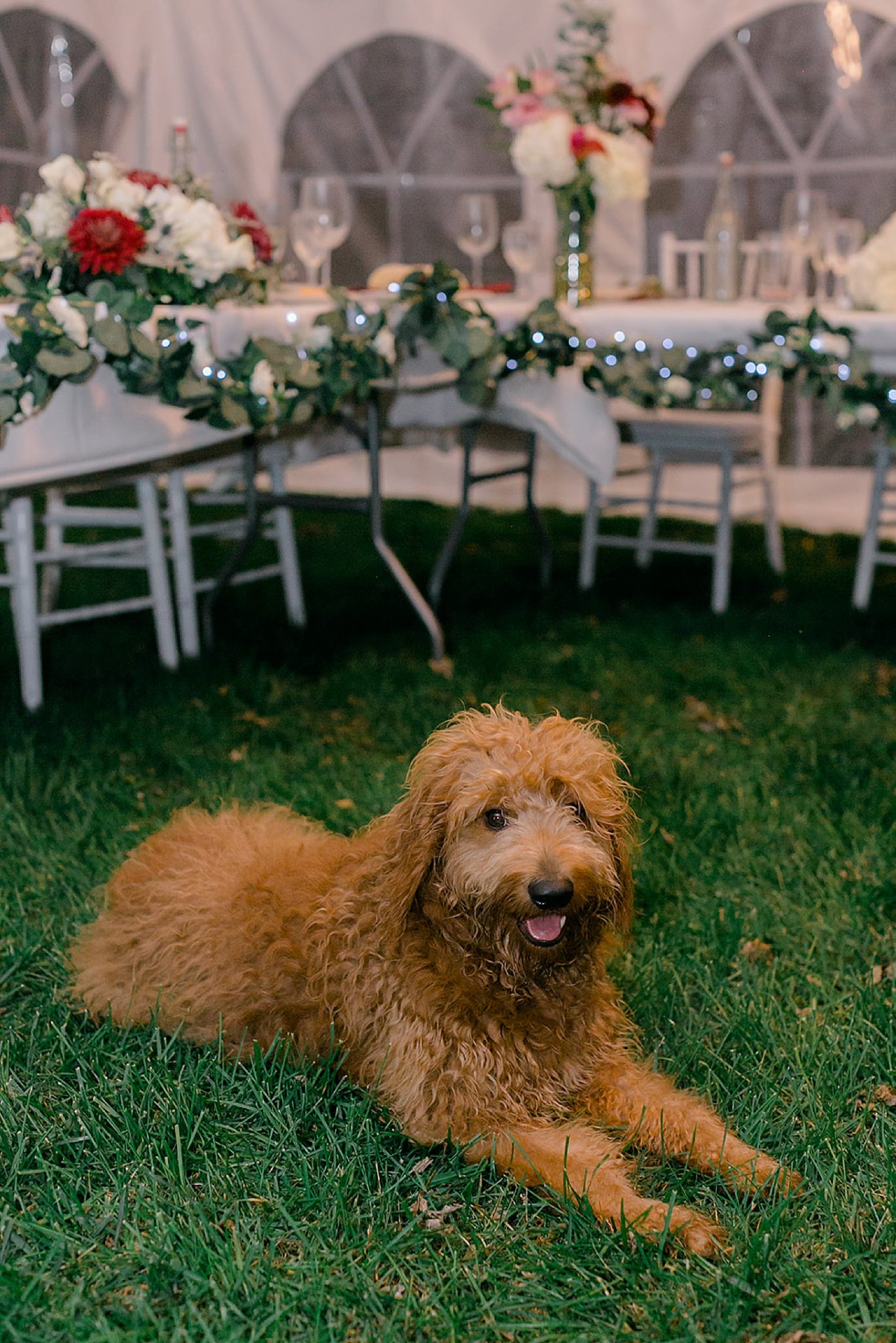 Cape May Intimate Wedding Photography by Magdalena Studios 0029 scaled