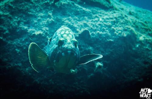 Mit dem Meer verschmelzen