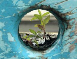 Resilience; BMR Framework