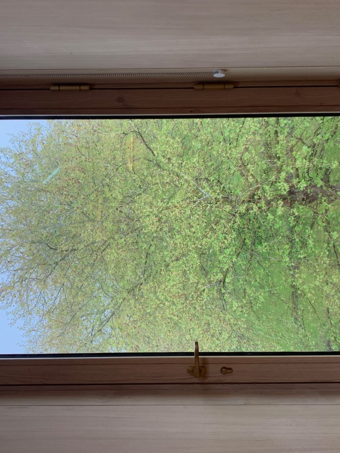 Spring leaves through 2nd floor window of New Library