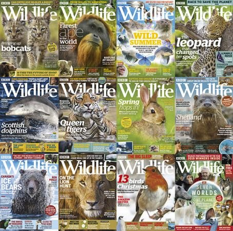BBC Wildlife – 2019 Full Year Issues Collection