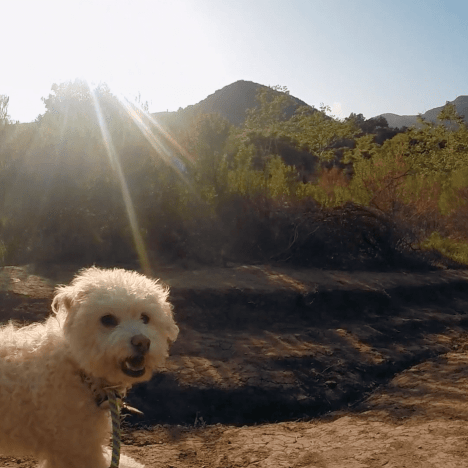Stand Up Paddleboard Dog Yoga – Maggie and Nicole