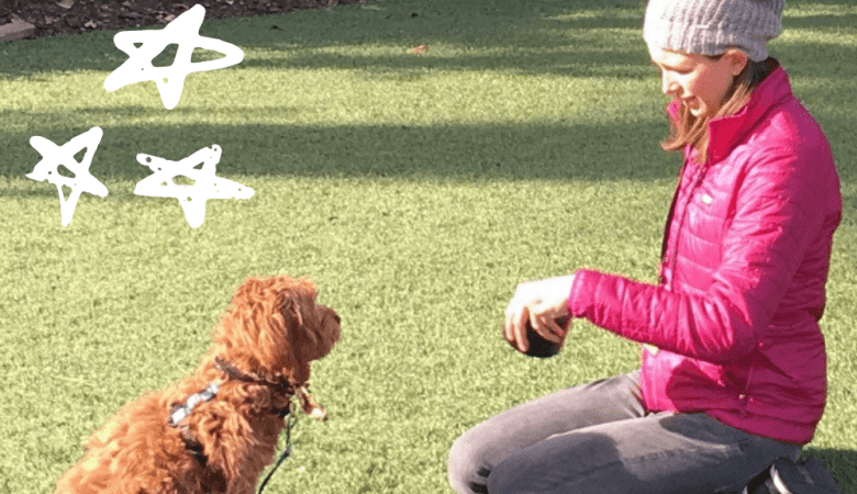 Getting started with golden doodle training