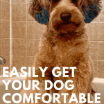 My dog hates the bath, how to get your dog comfortable in the bath