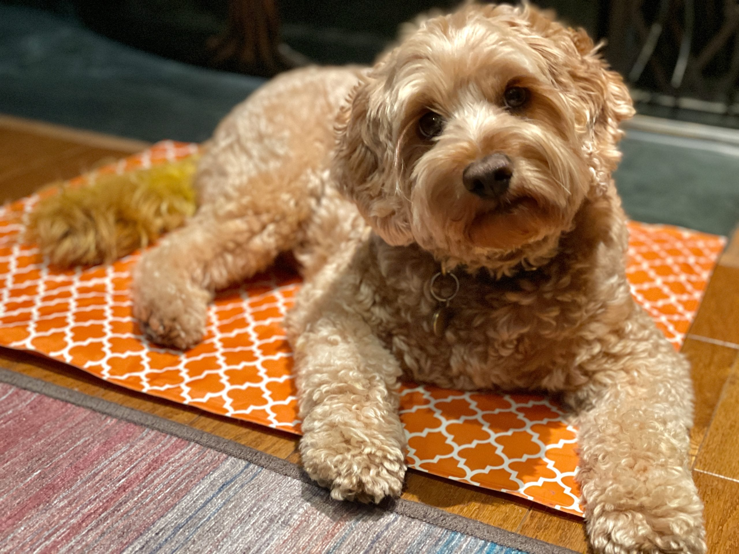 dog on cooling mat