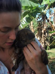 BELIZE- stray pups