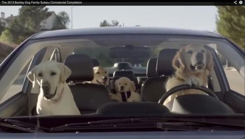 Dogs copy