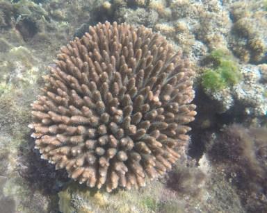Geoffrey Bay corals, 2017