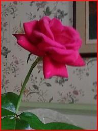 IMG_20140706_151601-2