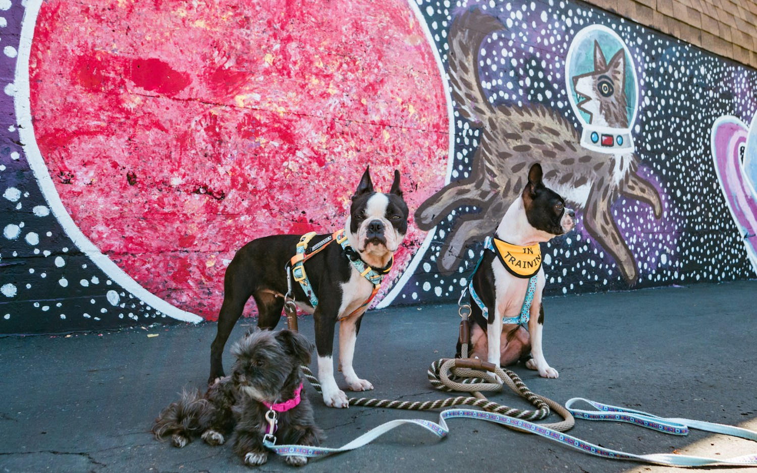 Dog Friendly Vista, Instagrammable Murals and the Yellow Deli Review