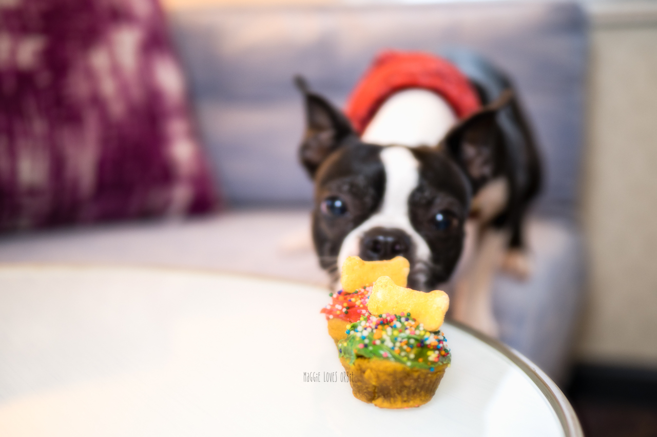 pupcake amenity hotel solemar for dogs