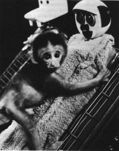 Harlow rhesus monkey