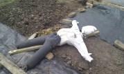 resting scarecrow