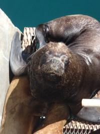 Sea lions at Puerto Madryn